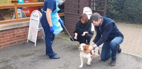 LIIGUTAV VIDEO | Röövitud koer pääseb 6 aastat hiljem pere juurde tagasi