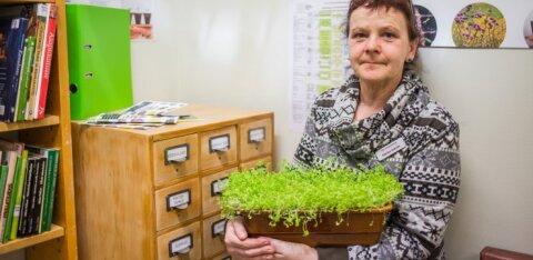 Tartu seemneraamatukogu hakkas vilja kandma, laenutada saab ka koha kastpeenras