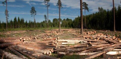 Лесопромышленность надеется увеличить объемы вырубки леса совместно с Eesti Energia