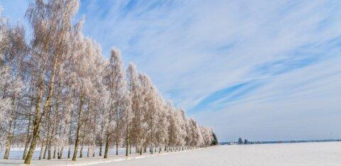 Пользуйтесь случаем! На этой неделе в Эстонии — прекрасная зимняя погода