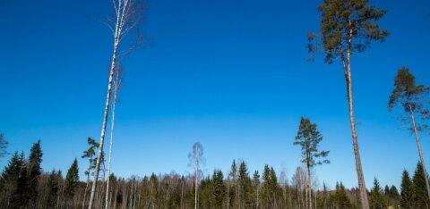 Соседи в шоке: у 94-летней женщины украли леса на 100 000 евро