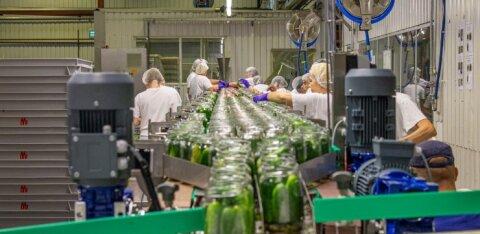 Дополнительные работники из Украины наняты для закатки огурцов на завод в Пыльтсамаа
