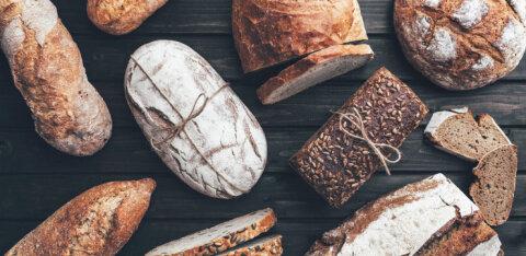 Kas sööksite leiba, mis on valmistatud ritsikajahust? Soovitused ritsikajahu kasutamiseks pitsatainas, banaanileivas ja pannkookides