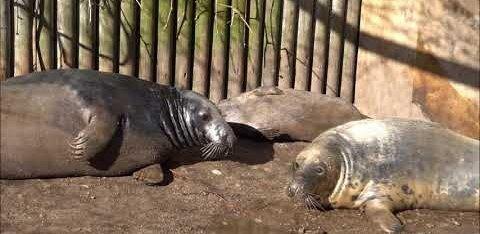 Родившегося в Таллиннском зоопарке тюлененка назвали Вирго