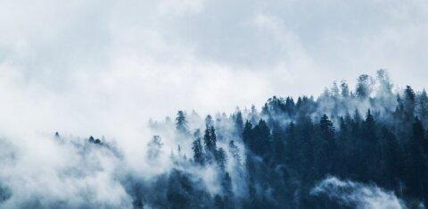 Гороскоп на 12 декабря: Овнам захочется убежать от суеты, а Близнецам не стоит быть поспешными
