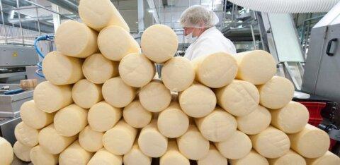 """""""Tantsime kriisidega nagu jenkat."""" Eesti piimatööstused taastuvad 2014. aasta kriisist. Täna läheb Eesti piimast pool välismaale"""