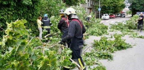 Из-за шторма до сих пор остаются без электричества 10 000 домохозяйств