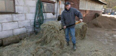 Ukrainlased trügivad Eesti taludesse sulasteks