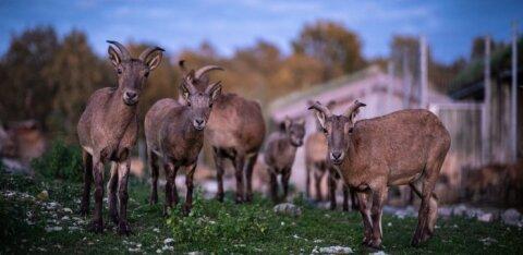 ÜRITUS | Jõulukuul toimuvad loomaaias põnevad õhturetked, kus saab uudistada öise eluviisiga loomi