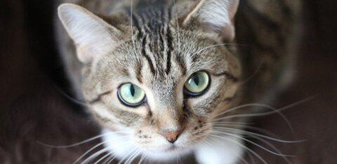 """В США кота отправили в """"одиночную камеру"""", чтобы он не выпускал других животных в приюте"""