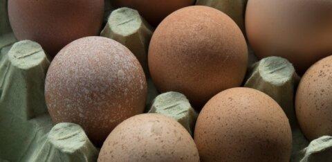Eesti suurima munatootja farmist leiti salmonelloosibakter, 54 000 kana hukatakse