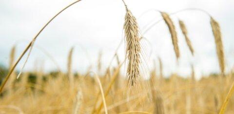 On oht, et meie toidus hakkab suurenema toksilise kemikaali kaadmiumi osakaal