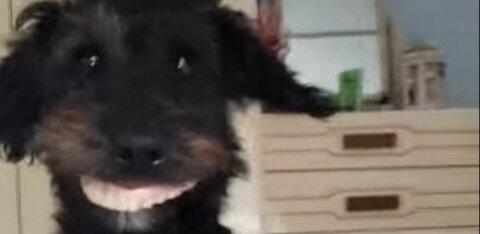 ВИДЕО | Собака с человеческими зубами — как это возможно?!