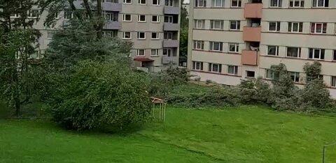 ВИДЕО | Во дворе жилого дома в Пайде ветер повали деревья