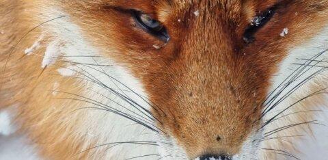 ФОТО | Смотрите, какие удивительные фотографии диких животных и птиц можно сделать на простой телефон