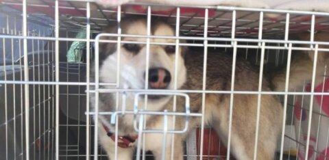 Nukrale emadepäevale tunnistajaks sattunud Saaremaa turvakodu: koerad nutsid inimesi nähes rõõmust