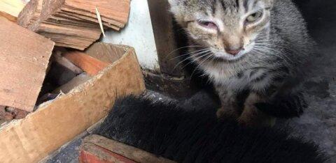 ФОТО | Утонувшие в грязи и умирающие от голода: в доме алкоголика нашли целую колонию спаривавшихся между собой кошек