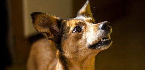 Leia omale sobivaim: noored avavad kodutute loomade abistamiseks lausa üle 20 kogumispunkti