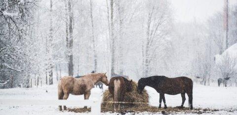 FOTOD | Viimaks ometi talv! Terve Eesti kadus koheva valge vaiba alla