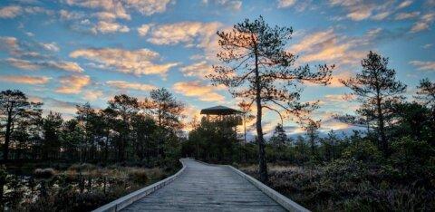 Любовь жителей Эстонии к природе наносит ей значительный ущерб