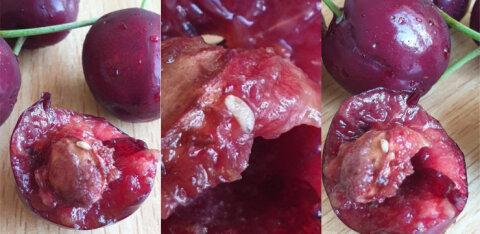 ФОТО: Клиента Maxima шокировали белые червяки в черешне. Департамент сельского хозяйства дополнительно проверит все магазины