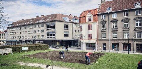 VIDEO | Riigikohus jättis vanalinna kartulipõllu toonud vaidluses õiguse linnale