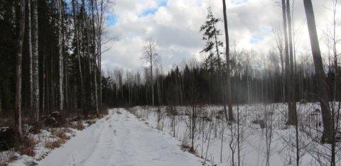 55 hektarist on reaalselt vääriselupaigaks osutunud kõigest üks