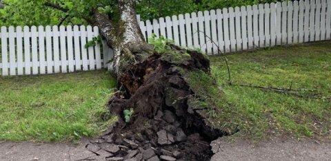 Ainuüksi juuli kaks suuremat tormi tekitasid kindlustusfirma klientidele ligi 63 000 euro väärtuses kahjusid