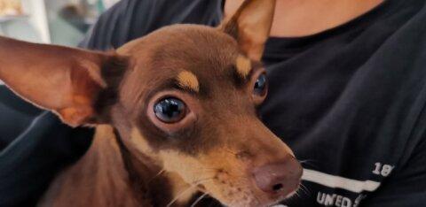 ФОТО: В Таллиннском порту собака застряла в ленте эскалатора