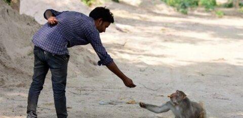 Ahvid röövisid Indias koroonahaigete verd