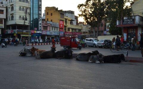 Kolm ööd mööda raudteerööpaid Põhja-Indiast lõunasse, peatused Udaipuris ja Mumbais