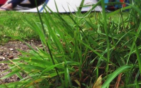 Kaitse end sääskede, puukide ja teiste tüütute putukate eest!