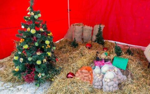 Eriti magusad allahindlused: vaata, kust saab jõulutuled, kuuseehted ja kunstkuused kuni 75% soodsamalt!
