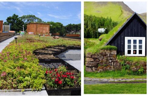Leidlik idee — raja aed katusele!