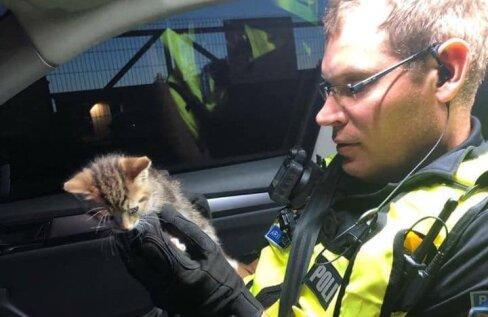 FOTO | Tublid patrullpolitseinikud päästsid öösel keset teed ekslenud kassipoja