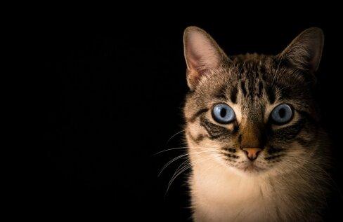 Pane kõrva taha! Kümme majapidamises leiduvat ainet, mis on kassile mürgised
