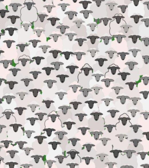 PILTMÕISTATUS: Kas ja kui kiiresti leiad lammaste seast üles kitse?