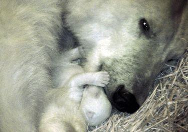 jääkaru Olinka