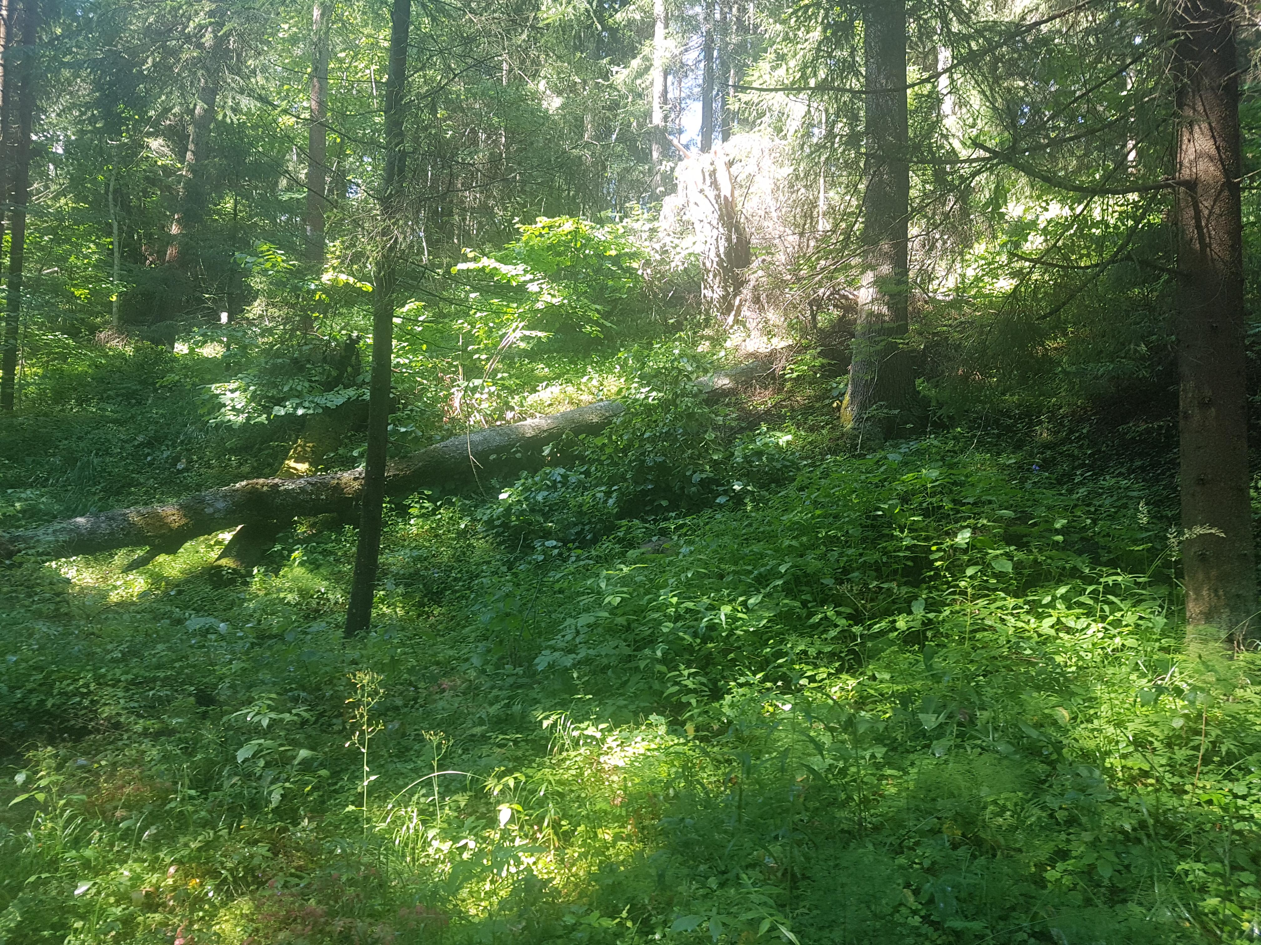 Puu visati tee äärde, kust see võib aga alla veereda. Lugeja foto
