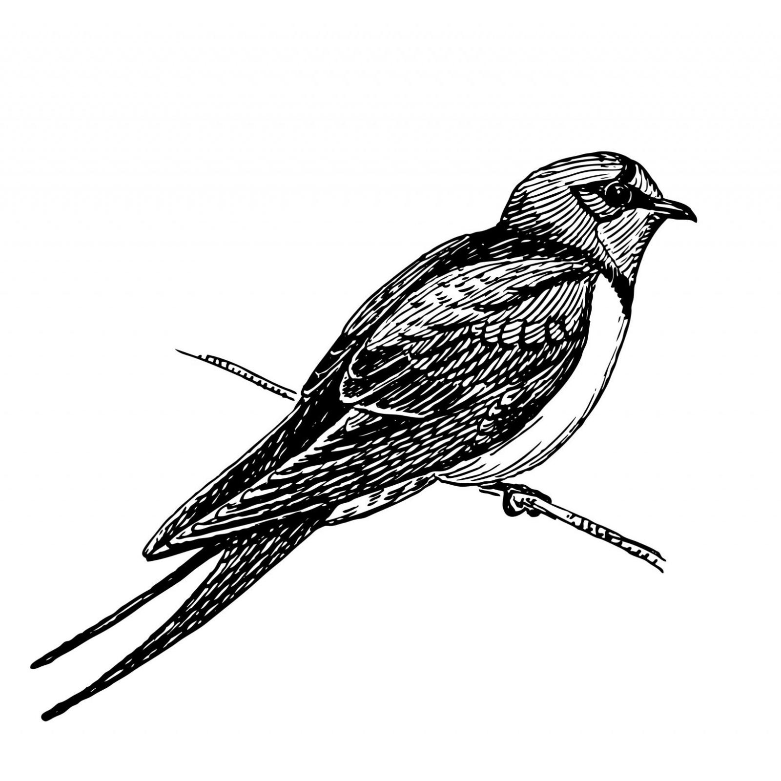 Linnuvaatleja.ee