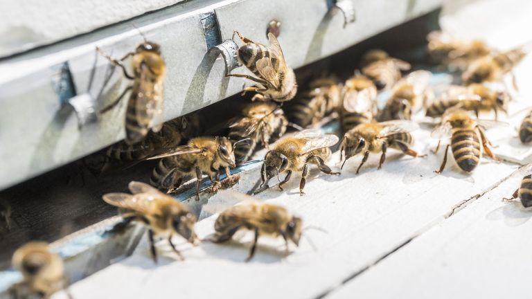 Presidendi mesilased