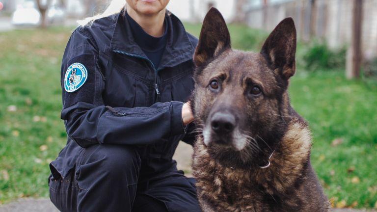Politseikoer Macho