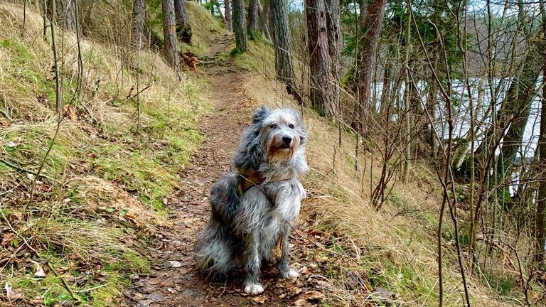 Pearu koer