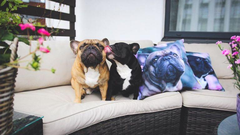 Lola ja Pepe