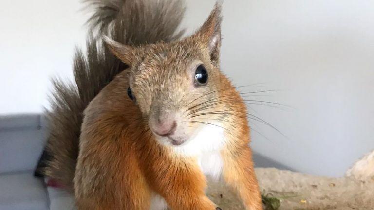 Orav Kiisu