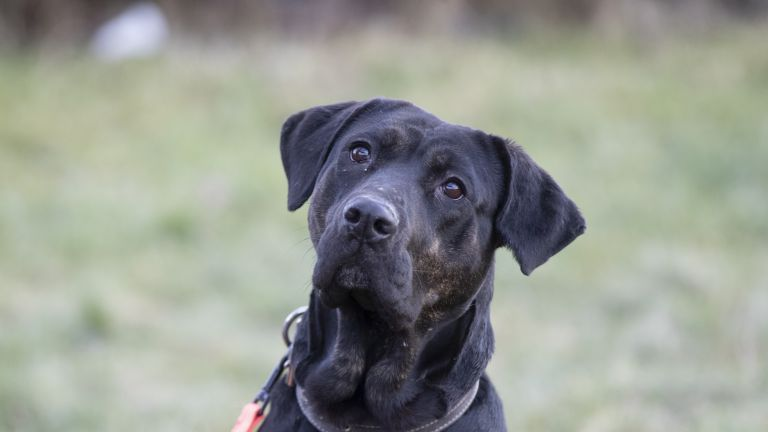 Varjupaiga koer Sussi